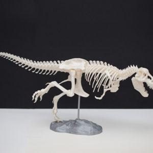 3D-T-Rex
